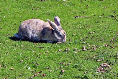 pet rabbits, container gardening