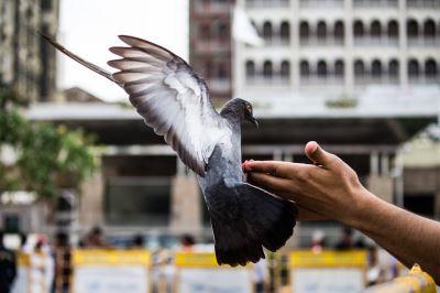 pet bird, pet birds