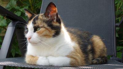 pet cat, cat care