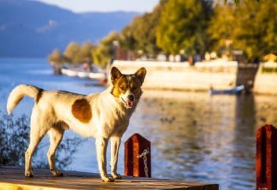 pet care, pet-friendly resolutions, Lenten season