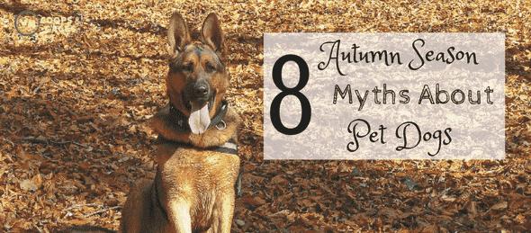 autumn season, pet myths, pet dogs