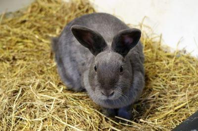 rabbit toys, pet rabbits