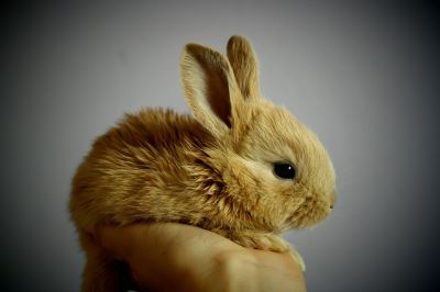 pet rabbits, pets, traveling with pets