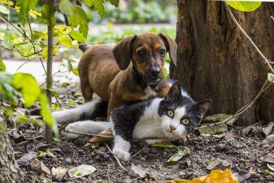 multiple pets, pets, pet care