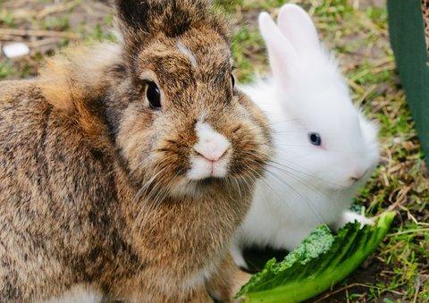 pet rabbits, care guide, pet care, rabbits, bunnies