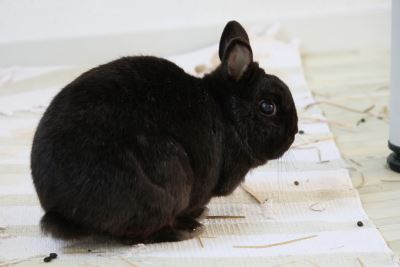 rabbits, bunnies, rabbit care, pet rabbit