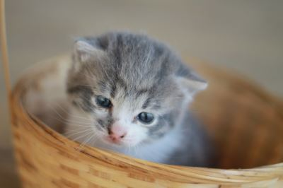 cats, kittens, kitten-proof, cat safety, cat ownership, cat care
