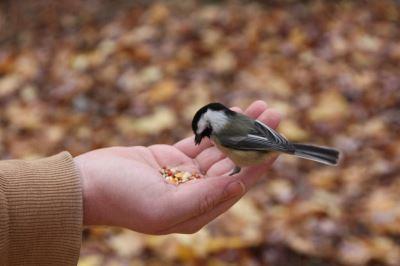 pet birds, pet bird feeds, bird cages