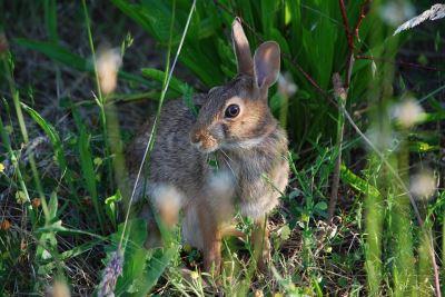 common rabbit injuries, rabbit care, rabbits, pet rabbits'