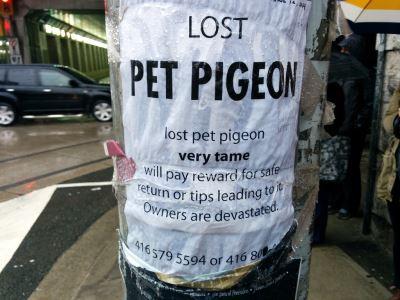 missing pets, pet care, pet care 101, raising pets