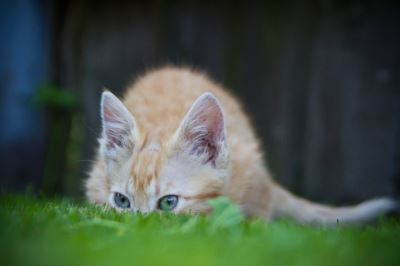 cats, pet cats, cat care, why cats hide