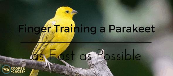 Parakeets, bird training, pet birds, bird care