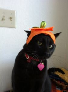 Halloween, Halloween with pets