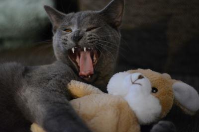cats, cat aggression, cat care