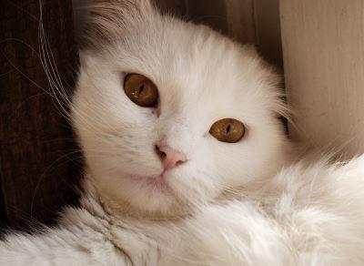 cats, new kitten, kitten introduction, introducing your new kitten