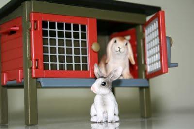 rabbit run, rabbit care, rabbit care 101