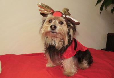Christmas with pets, activities for pets