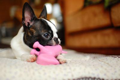 pet toys, pet safety, safe pet toys