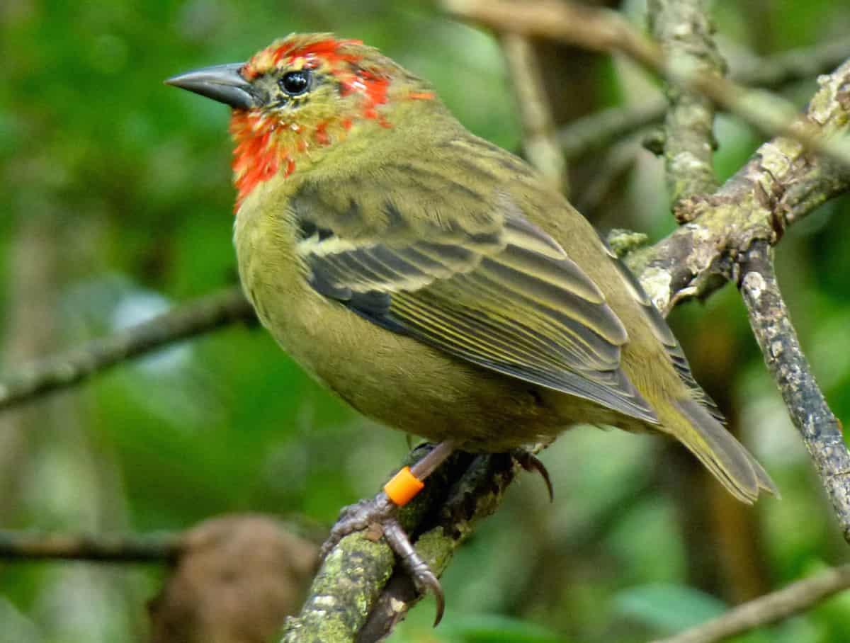 molting, pet bird, bird care