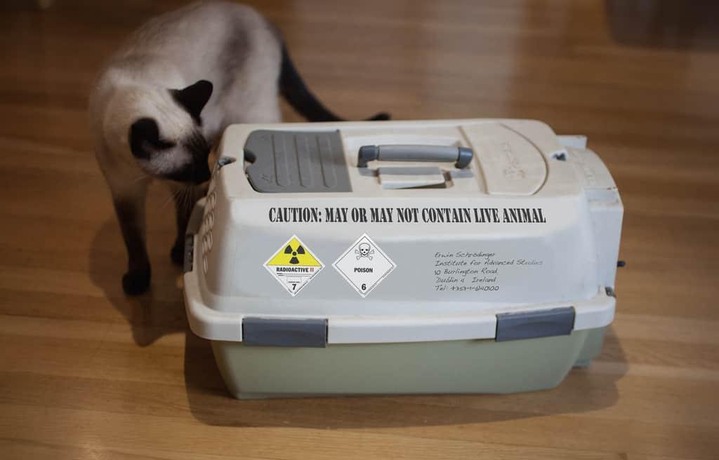 cat carrier, cat care, buy cat carrier