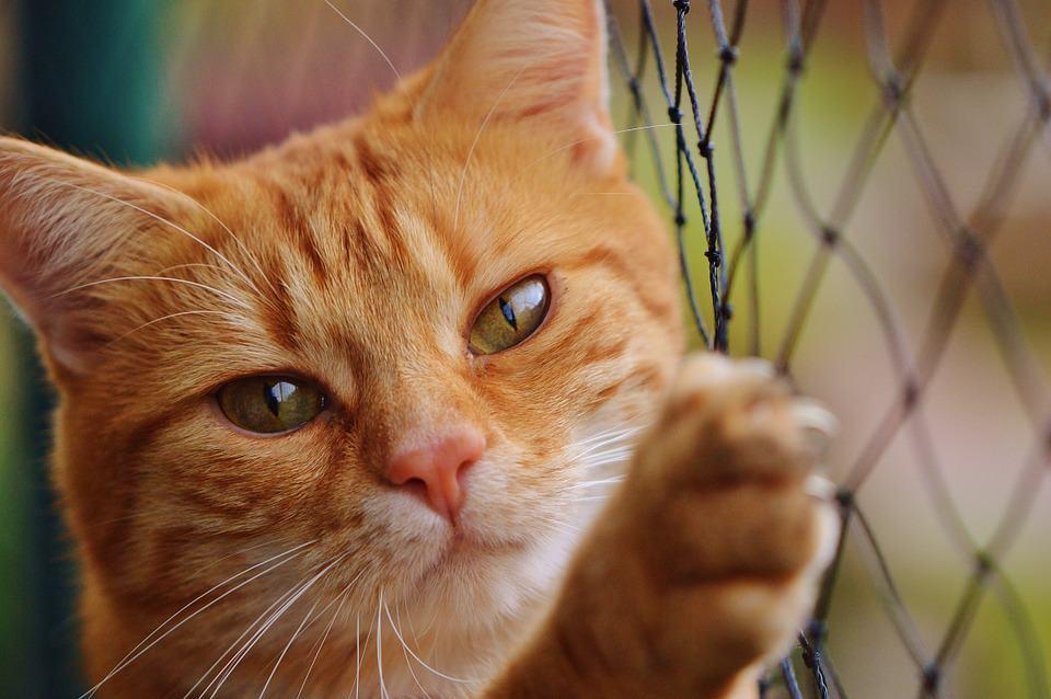 heartworm, pet care, cat care
