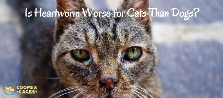 heartworm, pet care, cat care