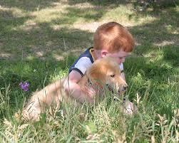 pet ownership, pet care, dog grooming, dog care