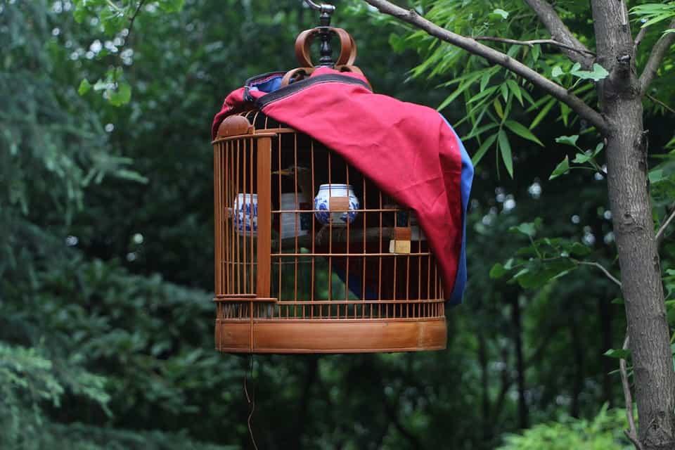 birds, bird cage, choose a bird cage