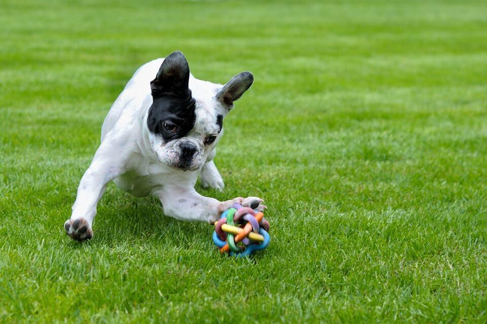 dog behavior, dog care, pet dogs