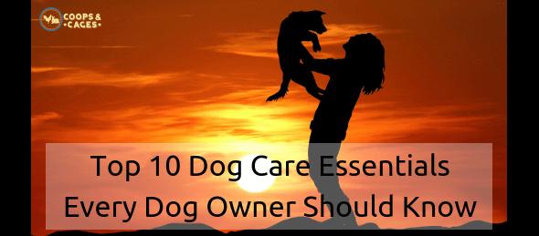 dog care essentials, dog care, pet dog, pet dogs, canine care
