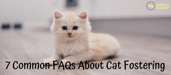 cat fostering, cat care, cat scratching posts