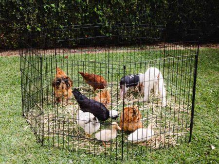 The Arena Large Dog Enclosure