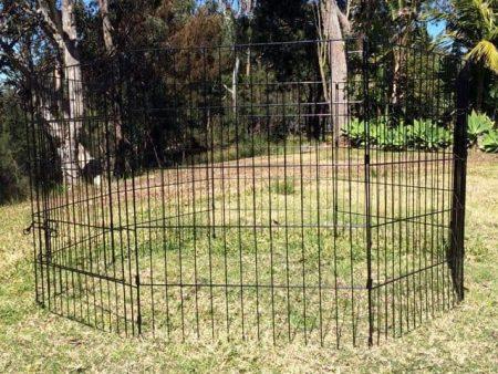 The Arena Rabbit Enclosure