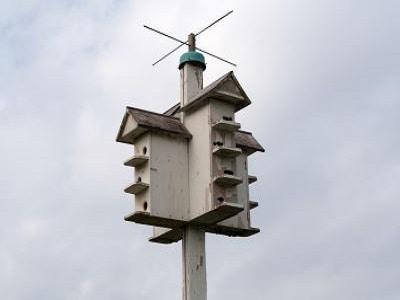 Bird Cages - Sydney