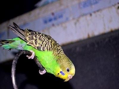 Bird cages - Brisbane