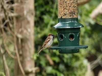 Birds - Perth