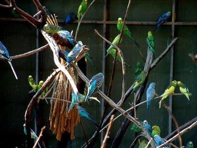 Brisbane Bird Cages