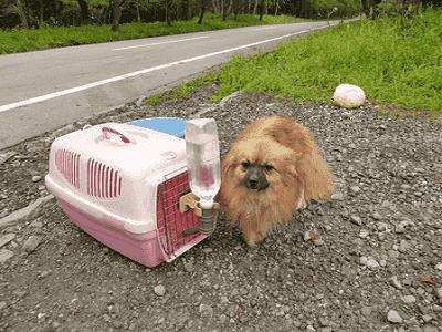 Brisbane Dog Kennels