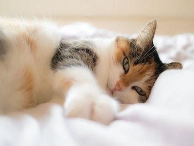 Cat Posts