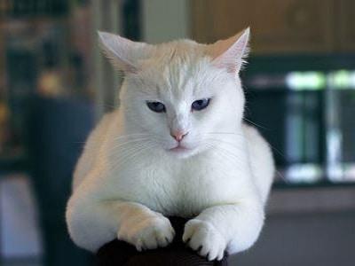 Cat Scratching Posts - Perth 2