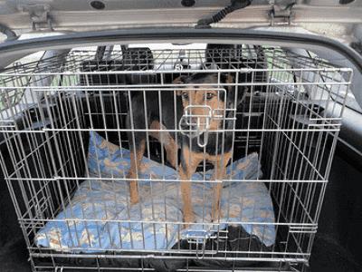 Dog Carrier Case - Brisbane