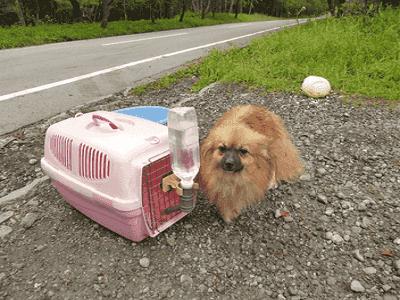 Dog Kennel Perth