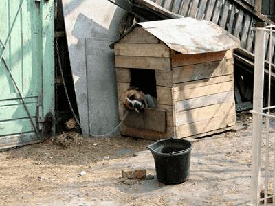 Dog Kennel - Perth