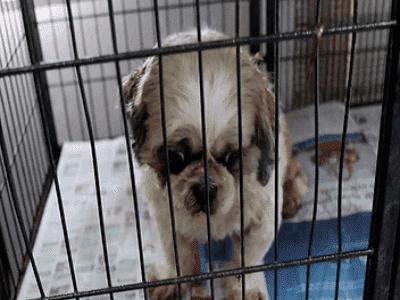 Dog Kennels Brisbane