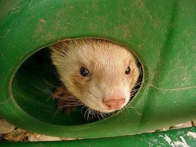 Ferret Cages - Melbourne