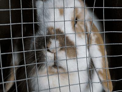 Keeping Rabbits - Brisbane