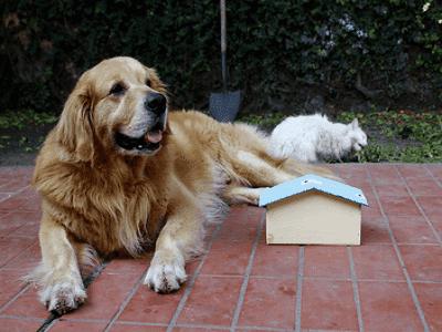 Melbourne Dog Kennels