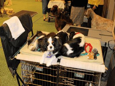 Perth Dogs