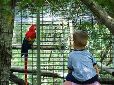 Pet Bird - Brisbane