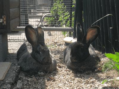 Rabbit Hutch Sydney